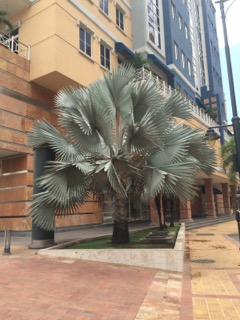 Guayaquil11