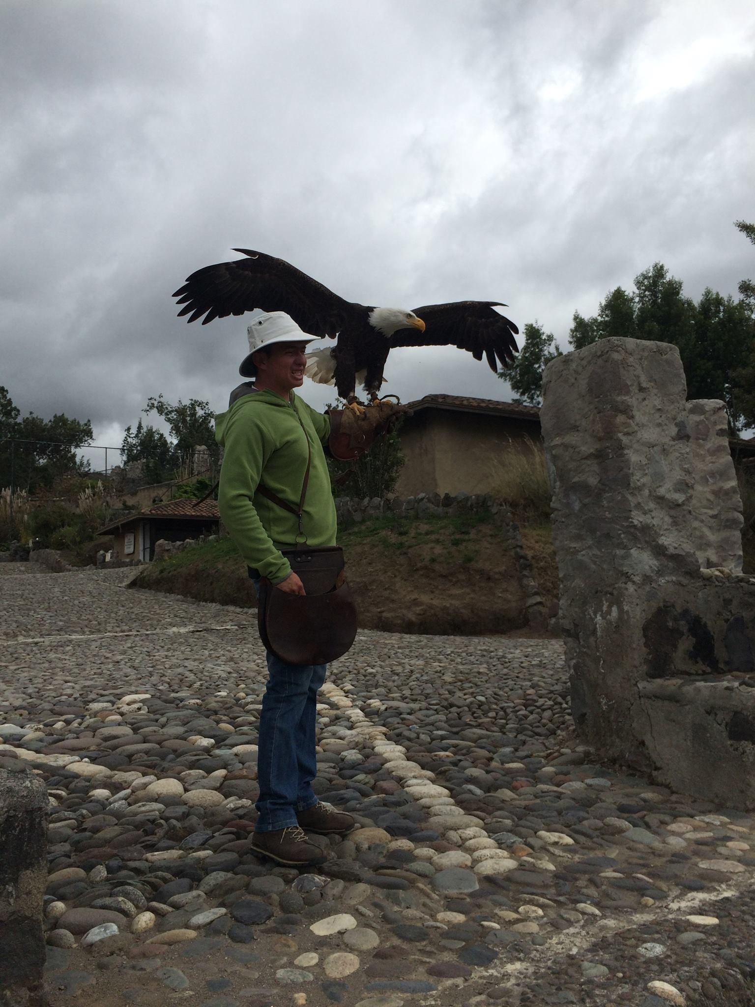 live condor