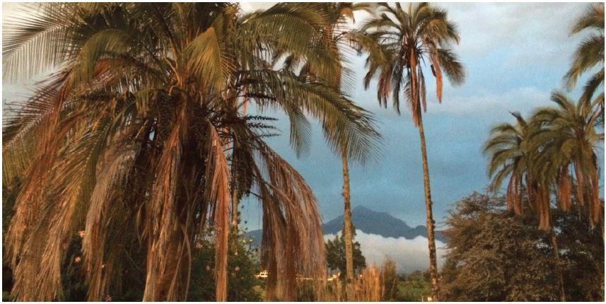 Ecuador palm trees